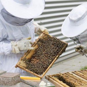 Beekeeper Bees Beehive Hive  - Topp-digital-Foto / Pixabay