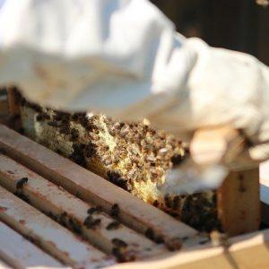 Bees Combs Honey Beekeeper  - JochenEhnes / Pixabay